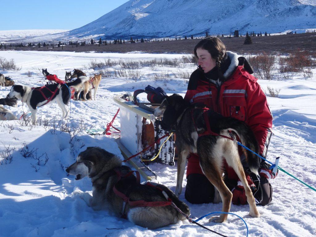 Blandine chien de traîneau Canada neige montagne